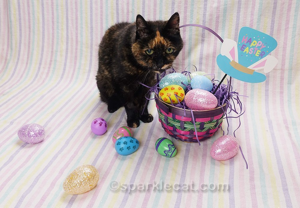 tortoiseshell cat in Easter setting