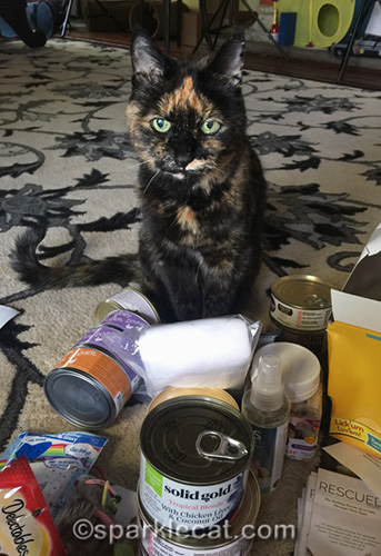 tortoiseshell cat begging to keep swag