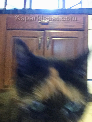 tortoiseshell cat takes over selfie
