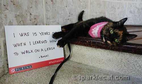 tortoiseshell cat on leash with PetPraising sign