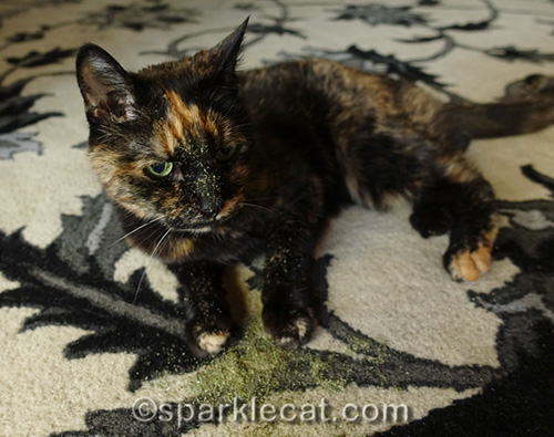 tortoiseshell cat with pile of catnip on rug