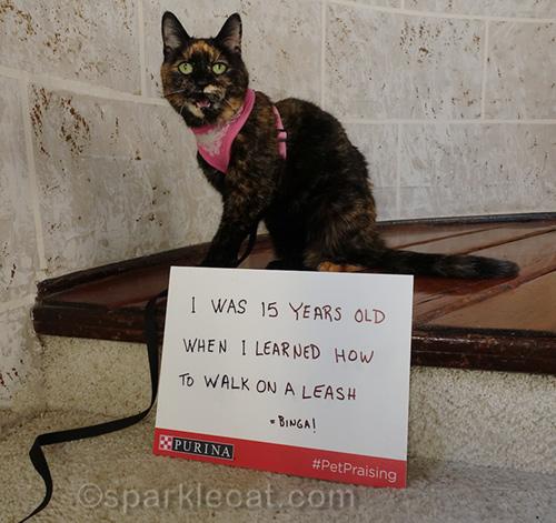 complaining tortoiseshell cat