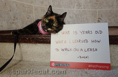 cute photo of tortoiseshell cat with bad photo of sign