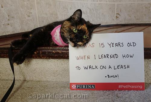 tortoiseshell cat leaning on sign