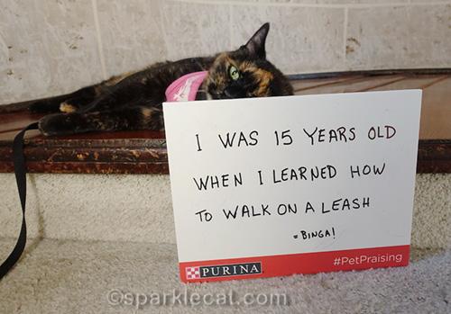 tortoiseshell cat half hiding behind sign
