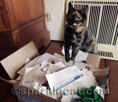 Don't tell my human that she shreds more than she files!
