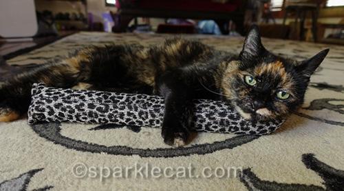 tortoiseshell cat enjoying a Kitty Kick Stix