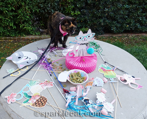 tortoiseshell cat looks over Cat World Domination Day wreckage