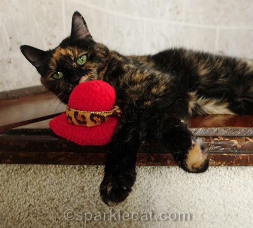 tortoiseshell cat sniffing red crocheted hat