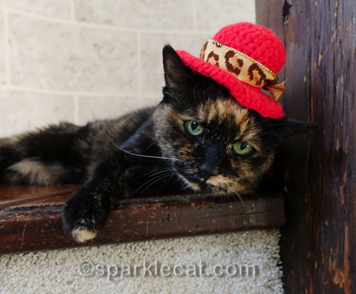 tortoiseshell cat with red crocheted hat