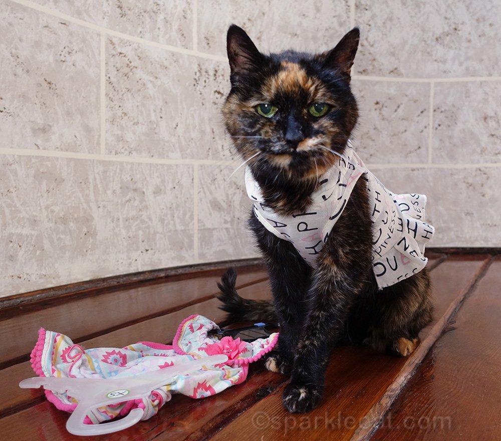 tortoiseshell cat annoyed by dress