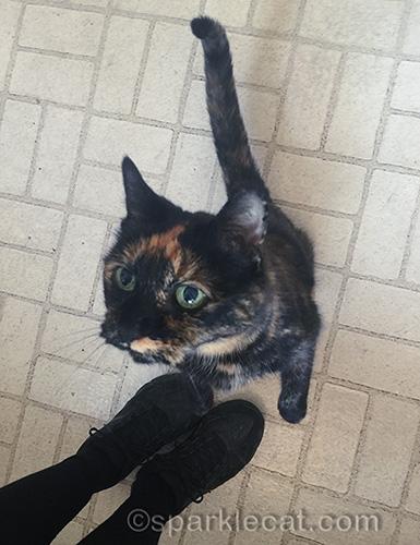 Binga begging for her meal