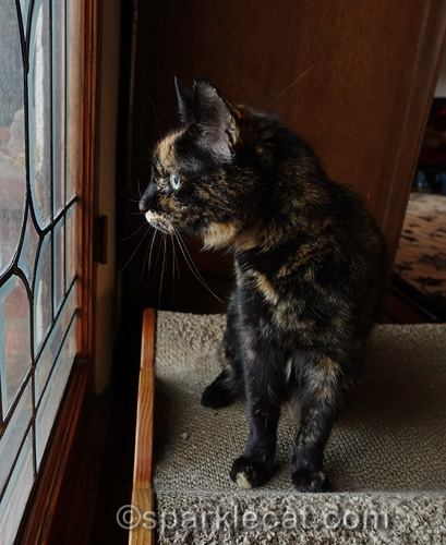 tortoiseshell cat sits on lounger and looks out window