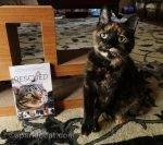 tortoiseshell cat posing with book