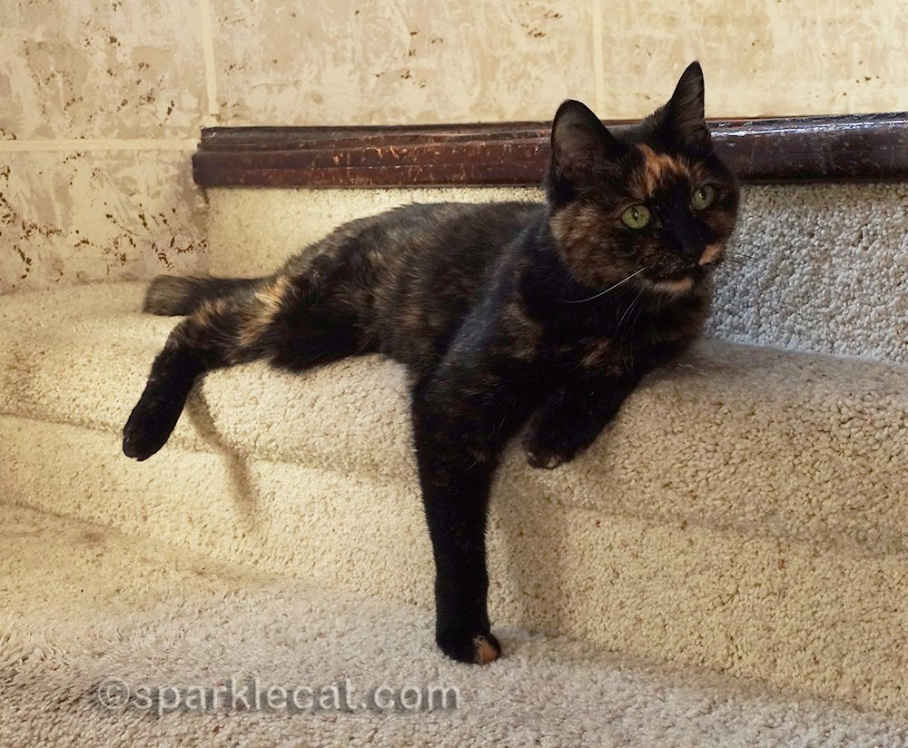 tortoiseshell cat on circular staircase