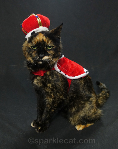 tortoiseshell cat in queen costume