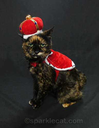tortoiseshell cat as queen for a day
