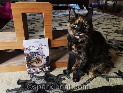 tortoiseshell cat helping out with Rescued 2 book giveaway