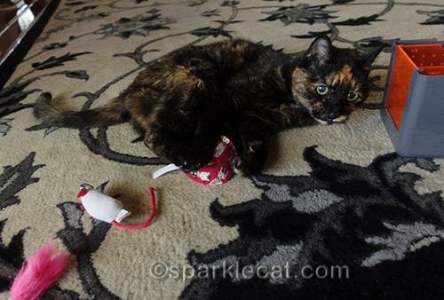 tortoiseshell cat with marinated cat toy