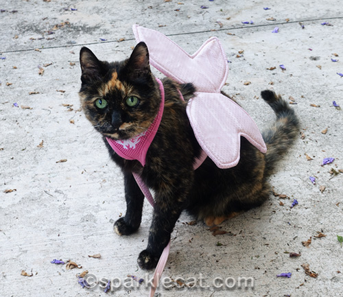 tortoiseshell cat wearing costume butterfly wings