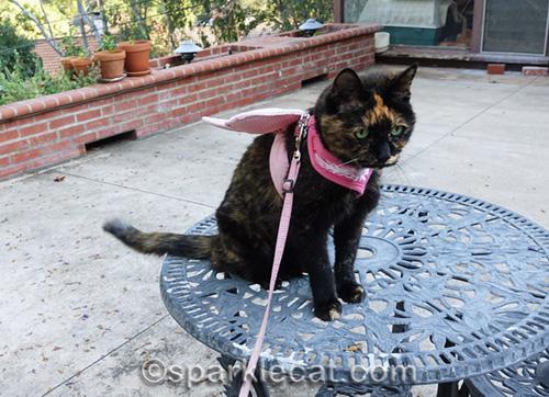 tortoiseshell cat wearing butterfly wings on patio table