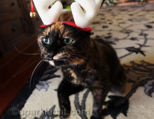 tortoiseshell cat in reindeer antler headgear