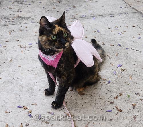 tortoiseshell cat wearing butterfly wings