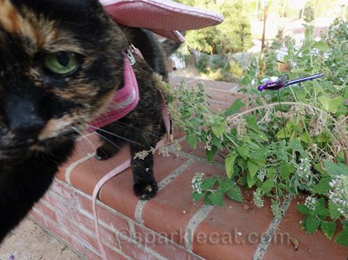 tortoiseshell cat reaching for camera