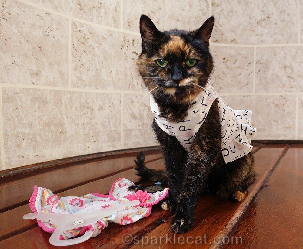 tortoiseshell cat in dress