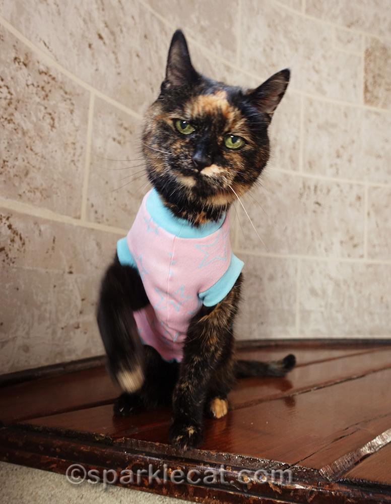 tortoiseshell cat wearing pink t-shirt