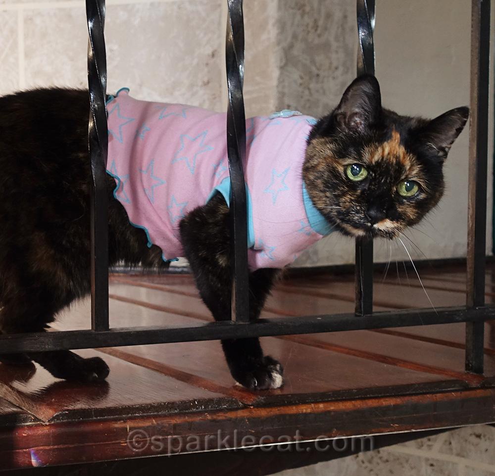 tortoiseshell cat in t-shirt by turret railing