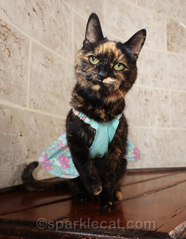 tortoiseshell cat in turquoise cat dress