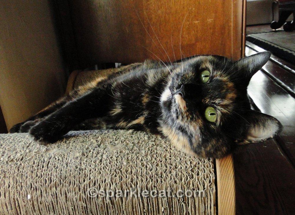 Tortoiseshell cat reclining on scratcher