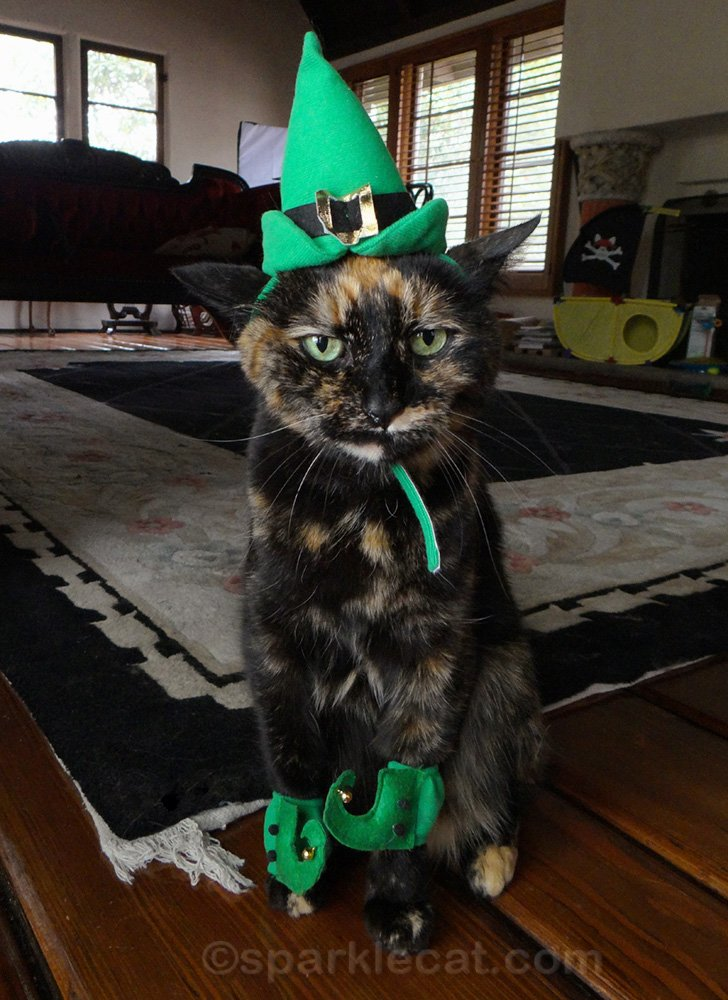 Mad tortoiseshell cat in elf costume