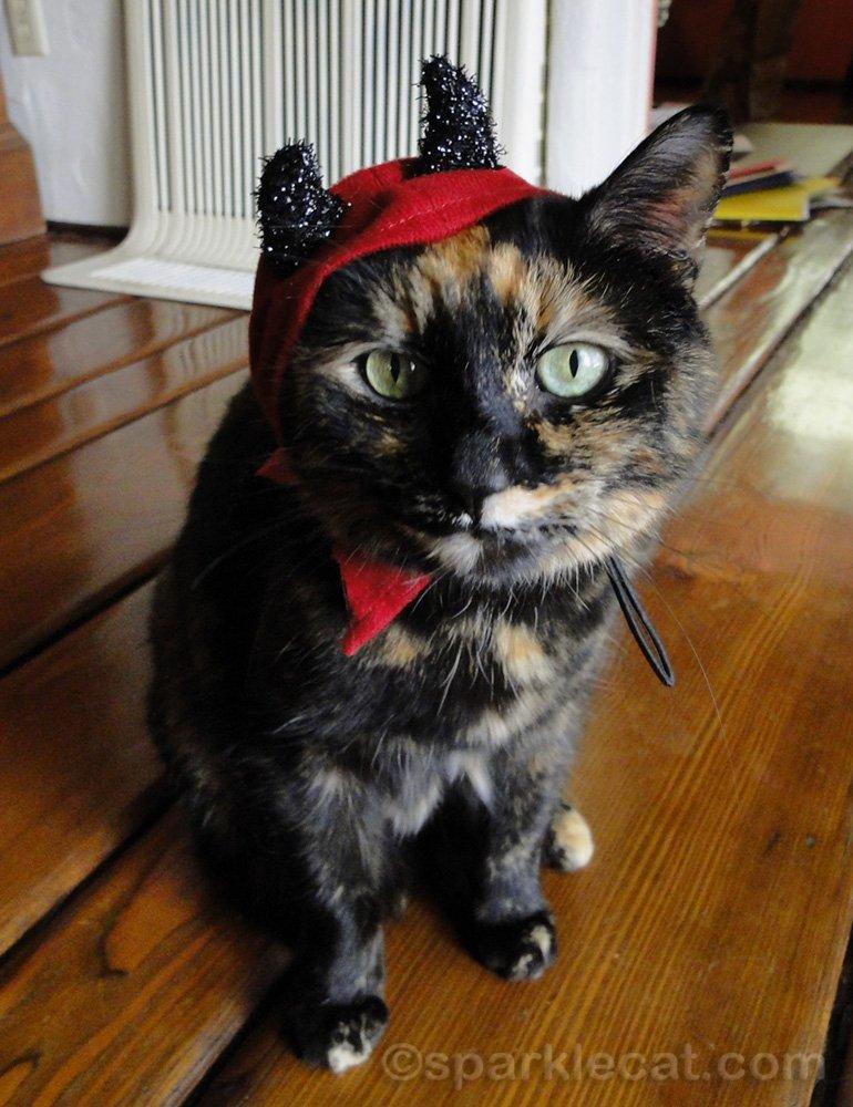 tortoiseshell cat in an ill-fitting devil headpiece