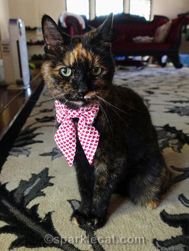 tortoiseshell cat with bow tie