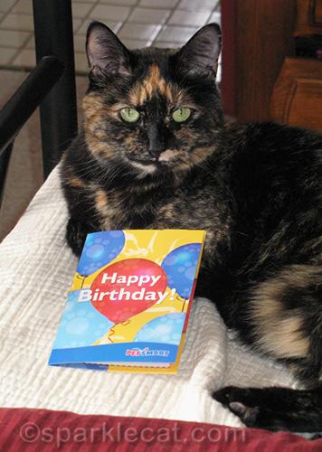 tortoiseshell cat with birthday card