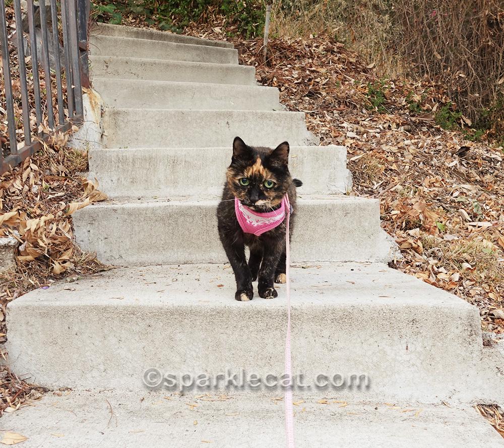 tortoiseshell cat coming down steps in backyard