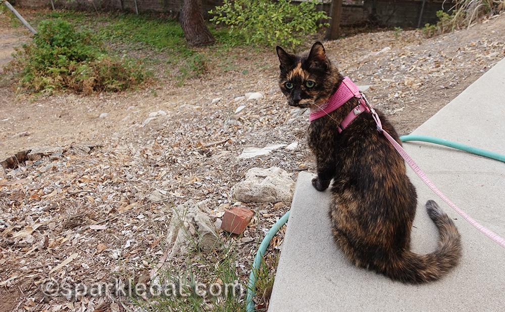 tortoiseshell cat at end of walkway