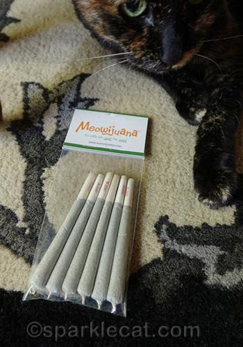 tortoiseshell cat posing with Meowijuana
