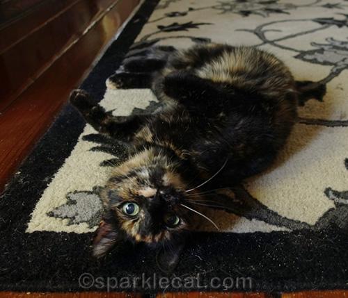 tortoiseshell cat rolling in catnip
