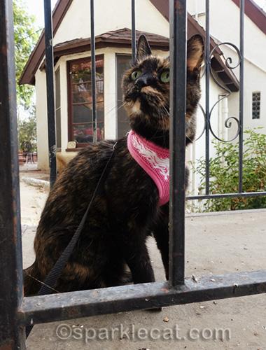 tortoiseshell cat shot through metal railing