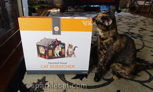 tortoiseshell cat rubbing on cat scratcher box
