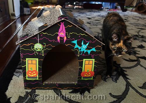 tortoiseshell cat examines haunted house scratcher