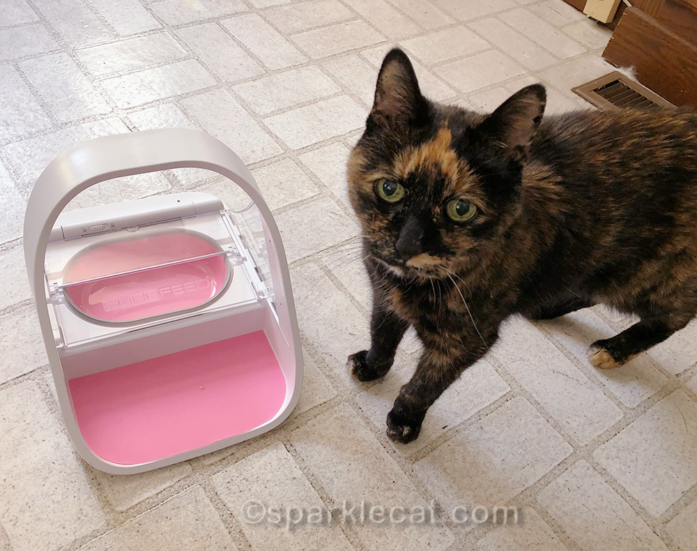 tortoiseshell cat posing with microchip pet feeder
