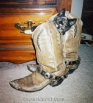 Binga as a kitten in cowboy boot