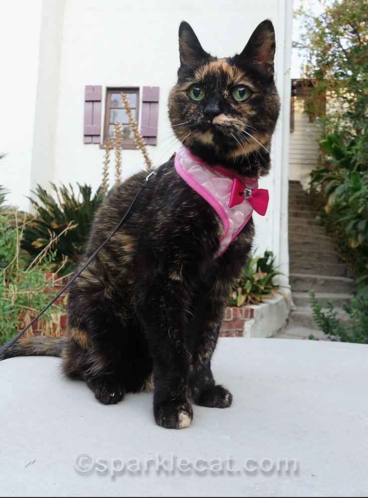 tortoiseshell cat on concrete table outside