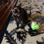 Caturday Cat Costume FAIL, Starring Binga