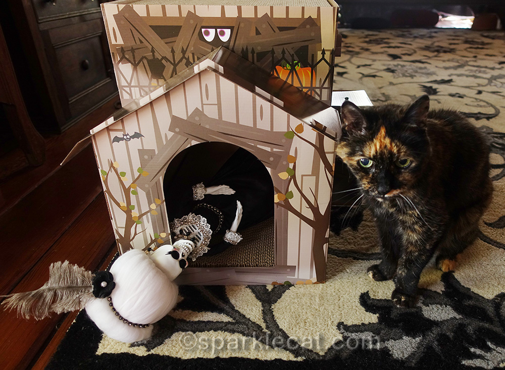 tortoiseshell cat and la suegra with haunted house