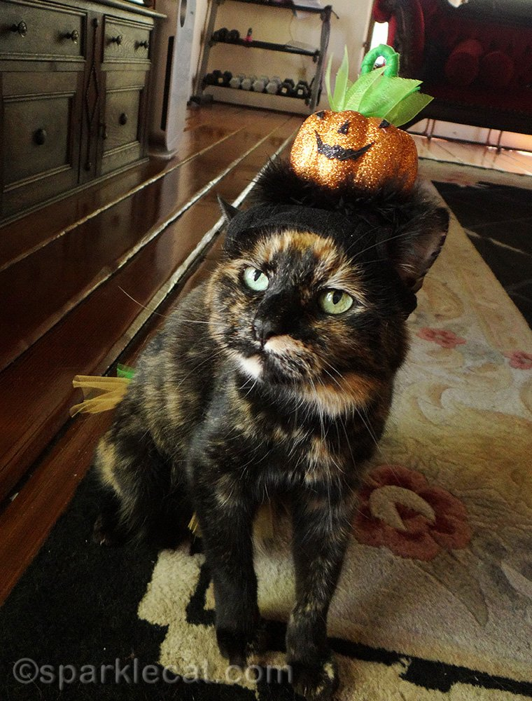 Summer features photos of Binga wearing Halloween cat costumes throughout the year.